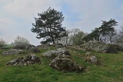 Bei Münzenberg in der Wetterau (nordelch61) Tags: hessen wetterau münzenberg landschaft felsen baum bäume naturlandschaft