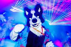 _MG_0609 (Tiger_Icecold) Tags: confuzzled cfz2016 cf2016 furcon furry convention fursuit birmingham party deaddog ddp deaddogparty