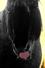 She hearts 💗me (cowgirlrightup) Tags: tongue nikita frost winter cowgirlrightup heart cold love