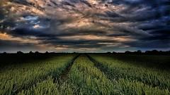 Over the Sky (cofarrell25) Tags: august landscape landscapes landing sky cloud clouds ireland weather autumn cloudscapes field greatphotographers
