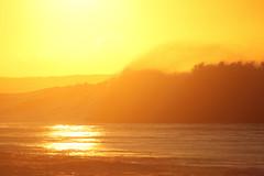 Golden Narrabeen (south*swell) Tags: ocean sea water wave narrabeen beach sydney australia nature beauty sunrise sun light yellow gold golden goldenhour