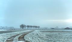 The frozen road to spring. (Alex-de-Haas) Tags: smorgens 50mm alexdehaas d5 dutch hdr holland january nederland nederlands netherlands nikkor nikkor50mm nikon nikond5 noordholland thenetherlands westfriesland clouds cold daglicht damp daylight farmfields farmlands fog foggy frost handheld haze hazy highdynamicrange hoarfrost ice icy januari koud laaghangendebewolking landscape landscapephotography landschap landschapsfotografie licht light manage meadows mist mistig misty morning nevel nevelig ochtend overdag polder rijp stables watervapor waterdamp weiland winter wolken