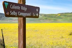 DSC07520 (peaceloverun@rocketmail.com) Tags: flowers yellow calienteridge selbycampground carizzoplain california centralcalifornia sanluisobispo