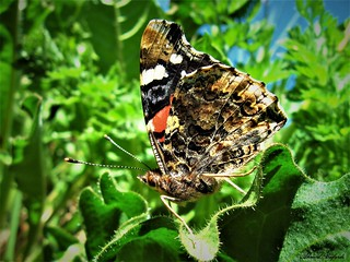 Butterfly 1224