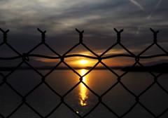 Sunny Side Up (MacroMarcie) Tags: sunrise fence fencefriday sparkle water reflection dramatic drama