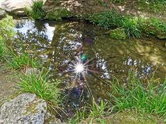 Parc Beaumont, Pau, France (DouxVide) Tags: france gx8 mft m43 pau sudouest aquitaine nouvelleaquitaine pyrenees bearn sunbursts sunstars sun mare etang pond light daytime shadow green spring nature reflection reflet trees parc park dark rays flower iris