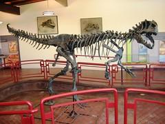 Allosaurus (BLMUtah) Tags: clevelandlloyddinosaurquarry utah pricefieldoffice blm bureauoflandmanagement ut dinosaurs learn education interpretive center visitor dinosaur diamond