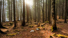 Forest near Laghi di Fusine (ScotchBroom) Tags: friuliveneziagiulia fvg tarvisio laghidifusine lagodifusine forest woods trees
