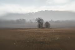 Moody landscape (Helena Normark - Away) Tags: hail hagel weather uvær mood moodylandscape leinstrand leinstrandmarka trondheim sørtrøndelag norway norge sonyalpha7 a7 lensbaby sweet50 lensbabysweet50