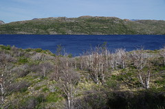 imgp3665 (Mr. Pi) Tags: trees lake deadwood hills chile andes nationalpark patagonia torresdelpaine lagoskottsberg