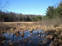 Hoist Lakes Foot Travel Area  - marsh (Bruces 51) Tags: hoist lakes foot travel area huron national forest marsh