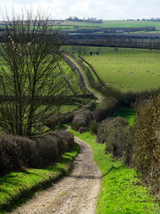 The lane out of Barley (Jayembee69) Tags: barley herts hertfordshire england english uk unitedkingdom lane hedge field fields sheep pasture meadow country countryside countrylane track hill landscape village stockbank newsells paddock rural green byway