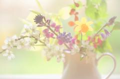 A Spring Posy (paulapics2) Tags: spring flowers fleurs flora floral blumen posy pastel nature arrangement blossom daffodil bluebell grapehyacinth wallflower feminine pretty canoneos5dmarkiii sigma105mmf28exdgoshsmmacro blüten blümen bokeh depthoffield