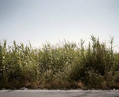 Castel Volturno, Campania, Italy, 2012. ### Castel Volturno, Campania, Italia, 2012. (Organ Vida Archive) Tags: camorra campania castelvolturnoambiente domitianlitoral italia italy licola napoli sud busstop fermatadellautobus immigration immigrazione landscape litoraledomizio paesaggio secondagenerazione south southitaly terremoto1980 wastedland