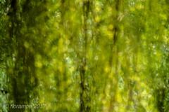 (Floramon) Tags: grün green trauerweide