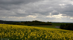 Dunkle Wolken übern Rapsfeld (diwe39) Tags: raps felder wolken