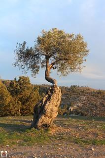 N-Cyprus056