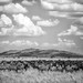 The Watchers - The Great Migration