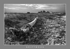 Driftwood (windshadow2) Tags: nikon beach driftwood