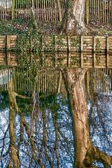 Weerspiegeling (Jan 1147) Tags: weerspiegeling spiegeling reflection natuur nature bomen trees depinte outdoor buitenopname belgium