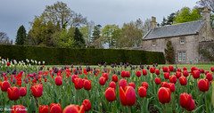 castle garden (Rourkeor) Tags: garden flowers bloom tulips red spring culzean maybole ayrshire scotland unitedkingdom gb sony sonyrx1r rx1r fullframe carlzeiss zeiss sonnar t 35mm colourful colours