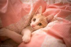 _DSC5574 (月詠小萌) Tags: 貓 猫 cat ねこ canon ef2870l