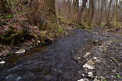 Turbulent Neglyadeyka (МирославСтаменов) Tags: russia moscowregion pushchino creek stream river water rapids coast tree forest alder spring stone rocks pebble