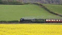 Green and Yellow 1 (ianwyliephoto) Tags: tornado 60163 steamengine steamtrain loco locomotive corbridge northumberland tynevalley tynedale ukrailtours train rapeseedoil yellow green