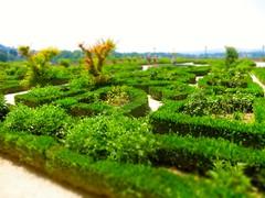 IMG_3996 (David Danzig) Tags: italy 2016 july florence arno river boboli gardens