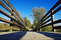 L'importante è non essere soli ... it's important not to be alone (Marco_964) Tags: sentiero via stada vita pentax path life alone soli natura