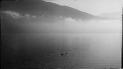 * (PattyK.) Tags: ioannina giannena giannina epirus ipiros balkans hellas ellada greece grecia griechenland europe europeanunion lake pamvotida lakepamvotida ioanninalake lakeside lakefront fog mist april spring 2017 snapseed samsungj5 whereilive ιωάννινα monochrome blackandwhite γιάννενα γιάννινα ήπειροσ βαλκάνια ελλάδα ευρώπη λίμνη παμβώτιδα λίμνηπαμβώτιδα λίμνηιωαννίνων δίπλαστηλίμνη ομίχλη απρίλιοσ άνοιξη
