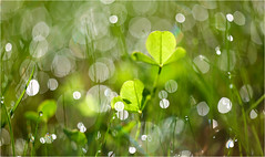 good morning (Ana Lukascuk) Tags: reflection green water grass rain bokeh dew