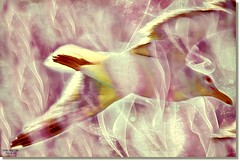 TRANSPARENCY-3 (jawadn_99) Tags: blue sea favorite white lake bird art texture nature water fauna poster photography interestingness perfect flickr photographer seagull board vivid scout explore passion boardwalk picnik refletion supershot eagull mygearandme galleryoffantasticshots