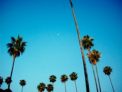 palmtreesmoon (Philip J. Harris) Tags: blue summer sky moon tree nature losangeles socal palmtree