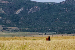 In The Tall Grass (Auntie K) Tags: ranch horse mountains grass landscape colorado fences zen