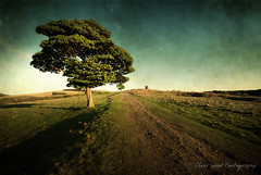 The Cage - Lyme Park (Oliver Wood Photography) Tags: lyme park cheshire landscape