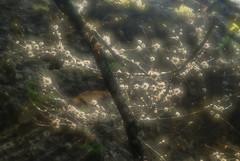 Hamilton Pool: bits o spanish moss (Jen's Photography) Tags: branches limbs gray hamiltonpoolnaturepreserve24300hamiltonpoolrddrippingspringstx5122642740·cotravistxus naturepreserve hamiltonpool hamiltonpoolnaturepreserve drippingsprings texas drippingspringstexas woods plants traviscounty park countypark weekend roadtrip nature latesummer earlyfall season seasonal outside outdoors organic scenic centraltexas texashillcountry hillcountry jensphotography nikon d80 nikond80 dslr september 2013 dof bokeh hamiltoncreek softfocus black spanishmoss glow backlit landscape bighugelabs fairytale