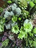 Ramo de flores de colores frescos (artesaniaflorae) Tags: photostream tarragona reus ramodeflores artefloral bouquetdefleur artfloral ramdeflors jukkaheinonen artesaniaflorae