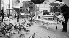 Standing with granny as the pigeons take flight (Eric Flexyourhead) Tags: street city people urban bw woman canada detail birds vancouver flying blackwhite bc britishcolumbia pigeons sidewalk granny gastown 169 waterstreet fragment panasoniclumixg14mmf25 olympusem5