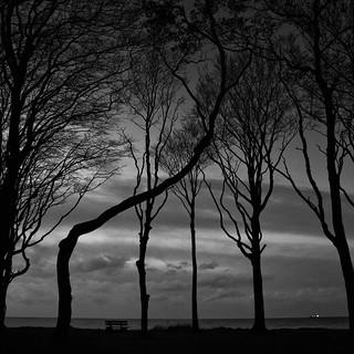 fall of the night (Gespensterwald 5)