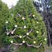 Trees_of_Loop_360_2013_033