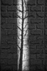 N131209_038.jpg (Tristan Styles) Tags: uk light shadow england urban bw abstract southwest tree nature wall bristol blackwhite nikon unitedkingdom d3s copyright2013tristanstylesallrightsreserved