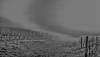 """campagna toscana ("""" paolo ammannati """") Tags: sky italy panorama me fog italia nuvole photographer top ombre io cielo tuscany toscana terra nebbia autunno viaggi biancoenero cipressi paoloammannati complimenti effettinaturali"""