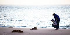 Naturschtzer (Klaus Stueckmann) Tags: strand meer dezember nordsee tier krank seehunde 2013 meerestier naturschtzer wrmerinderlunge