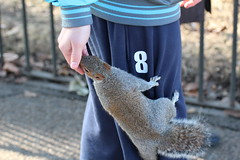 20120224 448 A squirrel gets nuts in Hyde Park, London (akkujala) Tags: london hydepark top20travel top20travelpix 20120227