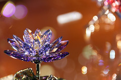 Crystal flower 2 (Romeodesign) Tags: light flower reflections petals purple crystal refraction glimmer twinkling 550d