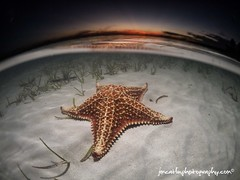 Starfish Sunset (jimcatlinphotography.com) Tags: sunset starfish under over grand cayman underwaterphotography underwaterimage
