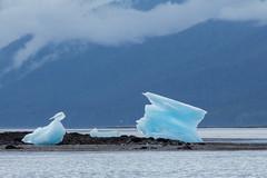 _MG_4865a (markbyzewski) Tags: alaska ugly iceberg tracyarm