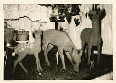 At night, when the lights were out, they would graze on the carpet and drapes (liquidnight) Tags: old blackandwhite bw monochrome strange animals vintage found blurry photos antique fake eerie haunted creepy deer collection fawn photograph 1950s vernacular snapshots haunting homedecor kitch photos interiordecor lawnanimals found