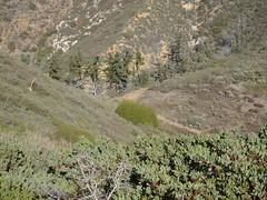 P1012670 (Brian Altmeyer) Tags: california mountains nature outdoors landscapes losangeles hiking scenic trails boulders recreation canyons valleys sangabrielmountains angelesnationalforest chaparral stoddardpeak barrettstoddardtrucktrail stoddardridge mtbaldyarea